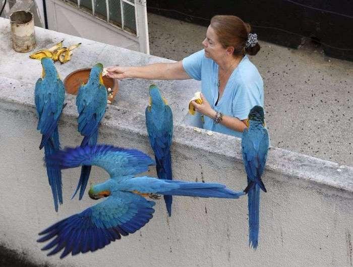 Как выглядят «голуби» в разных странах мира