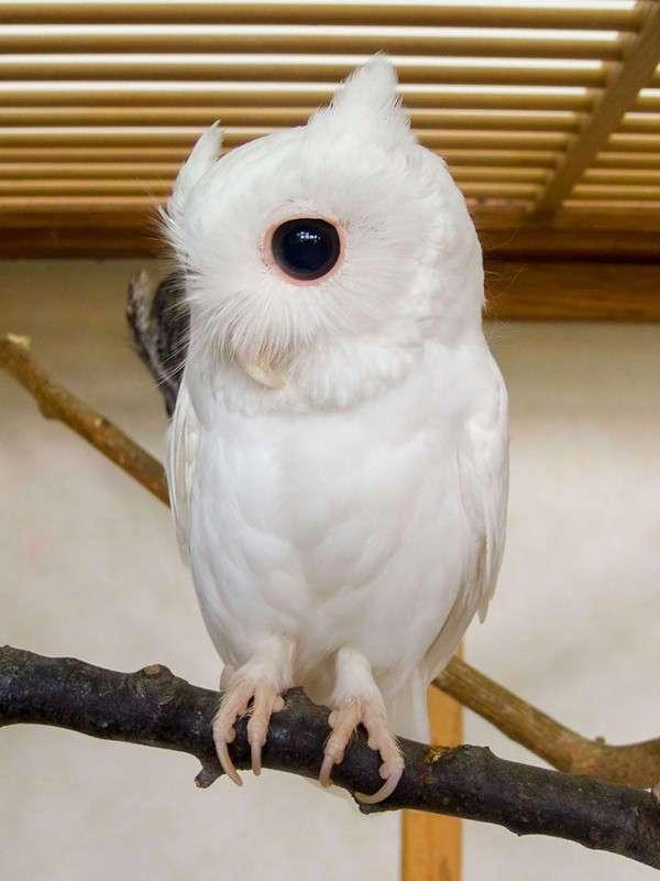 Капризы природы: животные-альбиносы