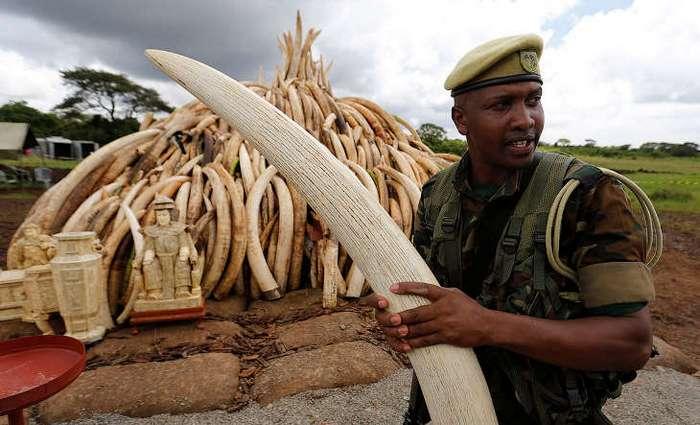 Кладбище слоновой кости