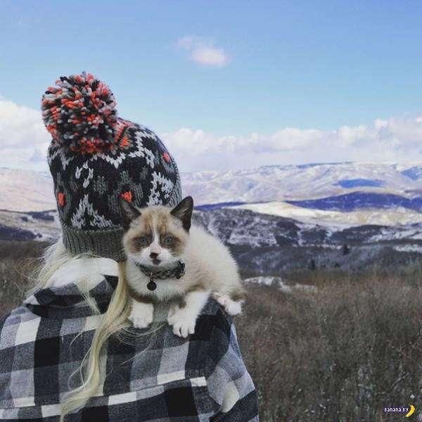 Коты-путешесвенники
