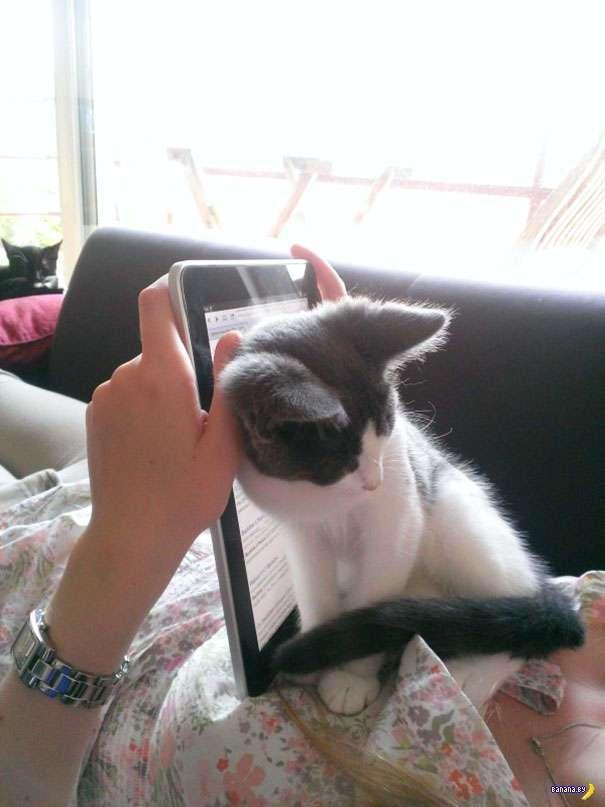 Коты против чтения