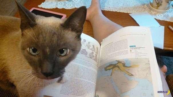Картинки по запросу Коты против чтения