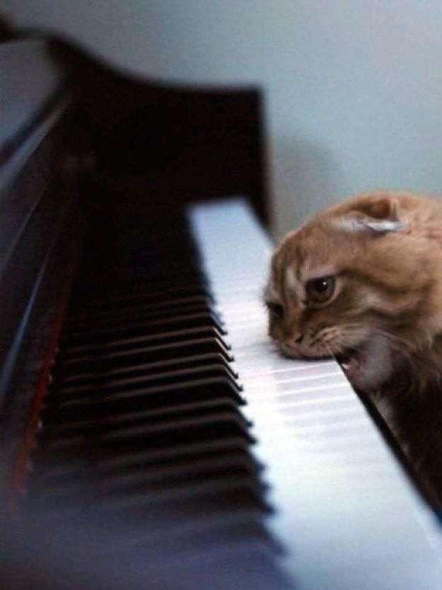 100 лучших фотографий кошек всех времен и народов