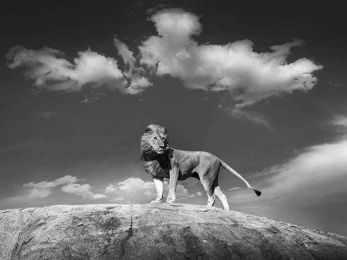 Лучшие фотографии от National Geographic апреля 2016 года