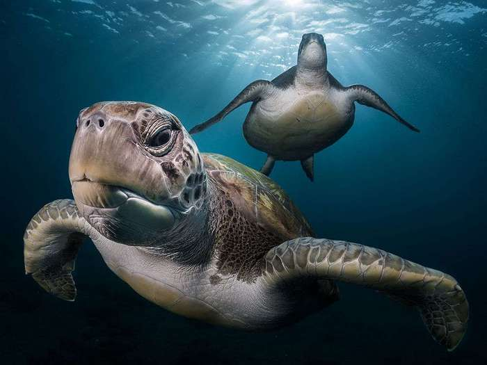 Лучшие фотографии от National Geographic июня 2016 года