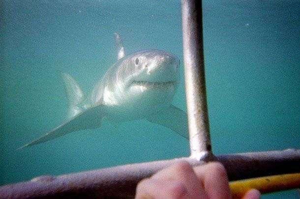 Малоизвестные факты про акул, которые вы могли не знать