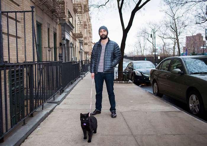 Одинокие мужчины и их котики