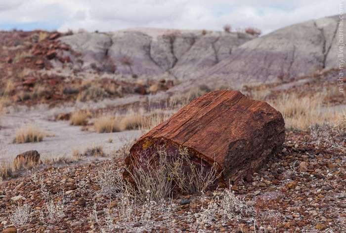 Национальный парк «Окаменевший лес»