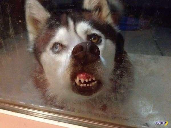 Не все собаки фотогеничны
