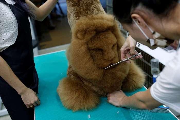 Парикмахер для животных