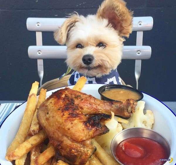 Пёс и его фудпорн