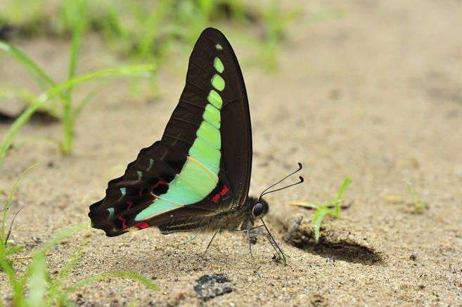 Поразительные возможности цветового зрения у животных