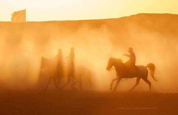 Правда жизни лошадей в Египте