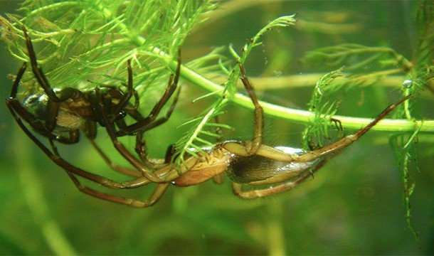 Причины, по которым пауки чрезвычайно ужасающи, но безумно интересны