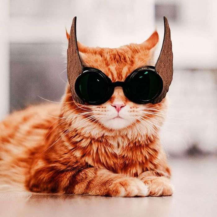Русский кот по имени Котлета покоряет интернет: рыжий всегда в моде!