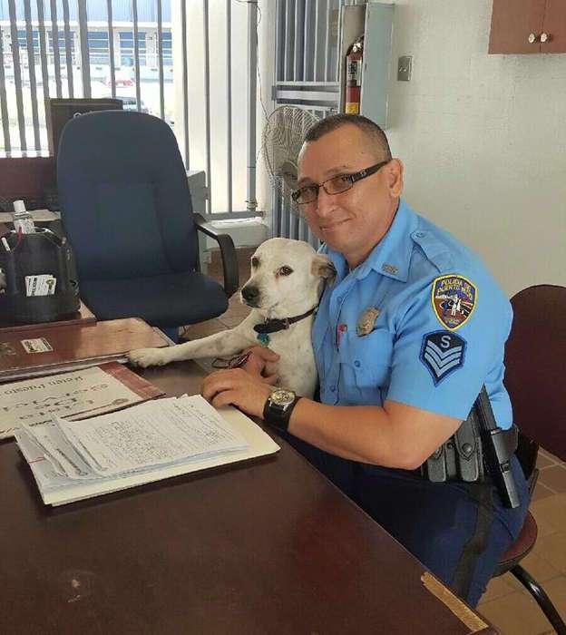 С улицы – на службу: бездомный пес нашел работу в полицейском участке