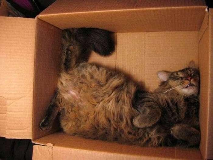 Коты, познавшие науку сна