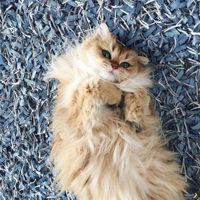 Смузи –самый фотогеничный кот в Интернете