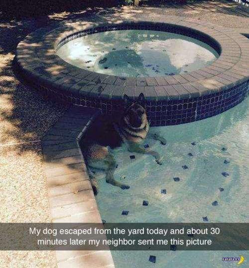 Собака –друг человека!