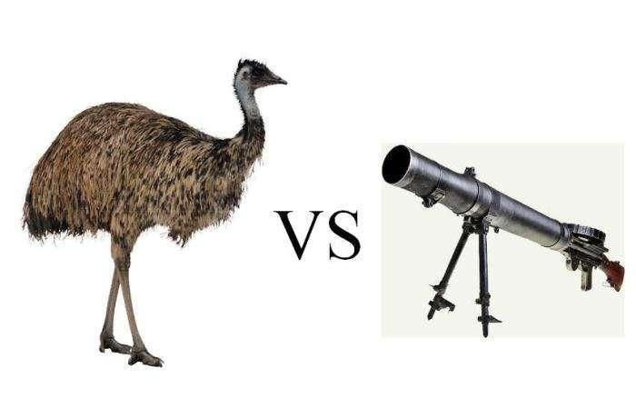 Страусы против пулемета, или Война с неожиданным финалом…