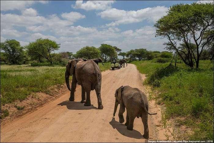 Царство слонов. Национальный парк Тарангире