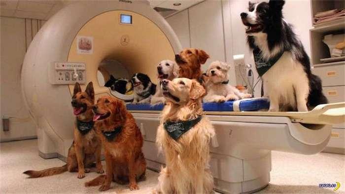 Ученые изучили, как собаки понимают нашу речь