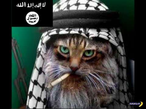 В Саудовской Аравии запрещают фотографировать котов
