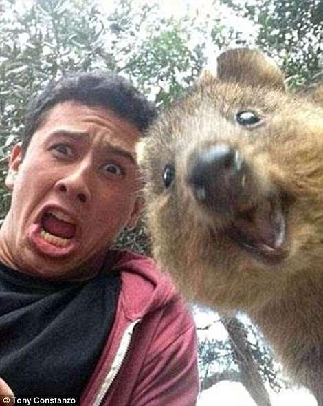 Забавнейшие фотографии животных, которые неожиданно вклинились в селфи