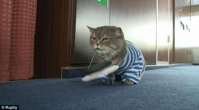 Замурчательный речной круиз с котом за штурвалом