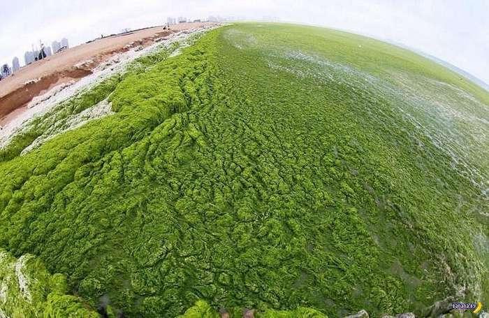 Зелёный пляж в Китае