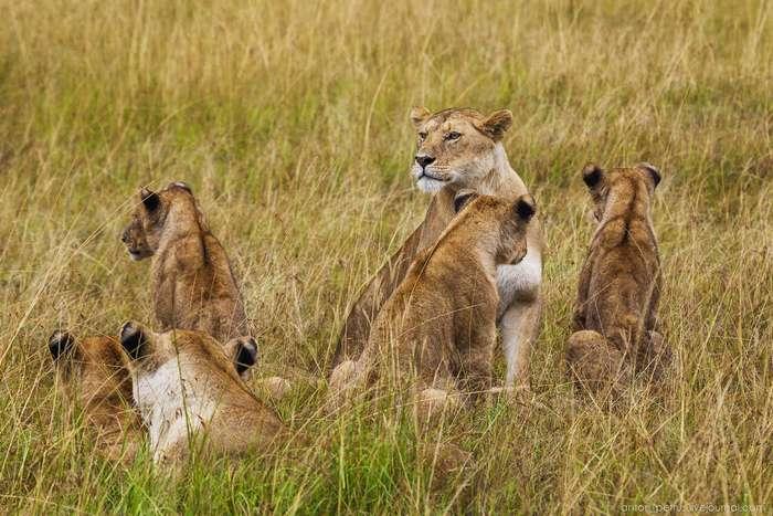 Живая Африка. Парк Масаи Мара