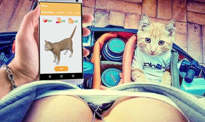 Интернет Котов – теперь живым питомцем можно управлять со смартфона