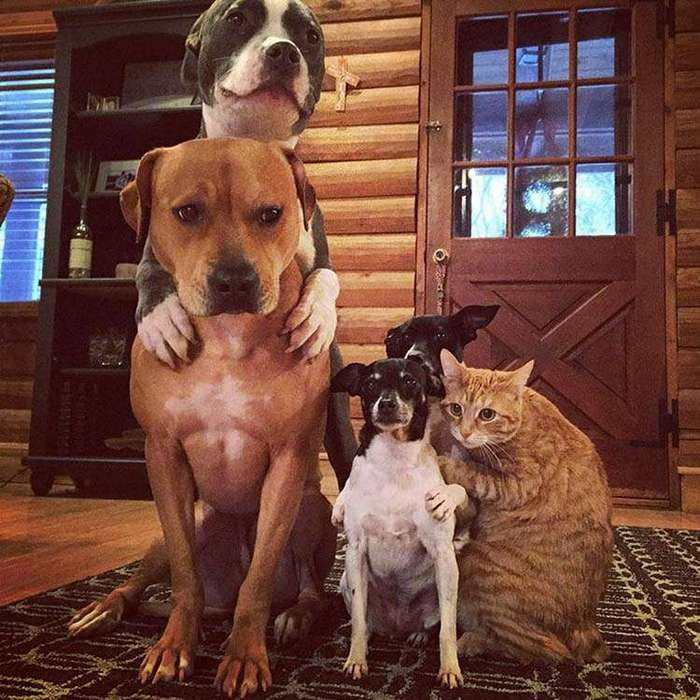 Дружная семейка, где собаки, утки и кошка живут душа в душу