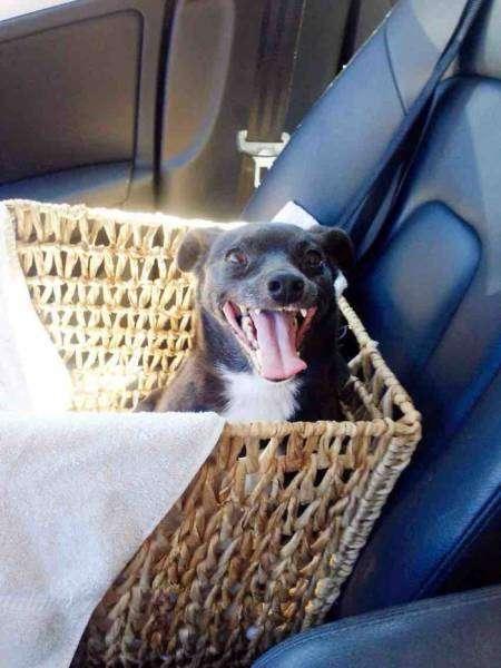 Счастливые собаки, которых только что забрали из приюта
