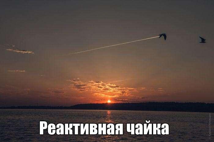 Подборка прикольных фото №1425 (103 фото)