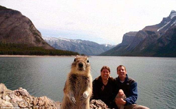 Забавные фотографии животных (20 фото)