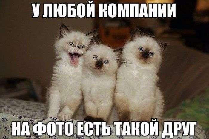 Подборка прикольных фото №1510 (103 фото)