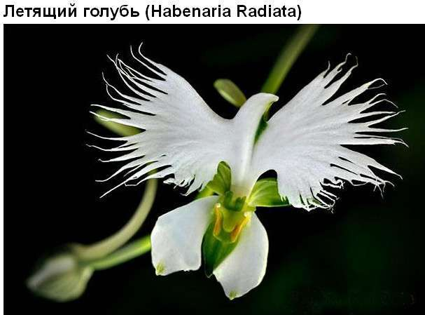 Цветы, которые умеют притворяться (36 фото)