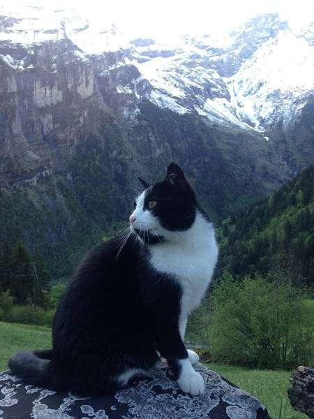 Кот-проводник указал путь заблудившемуся туристу
