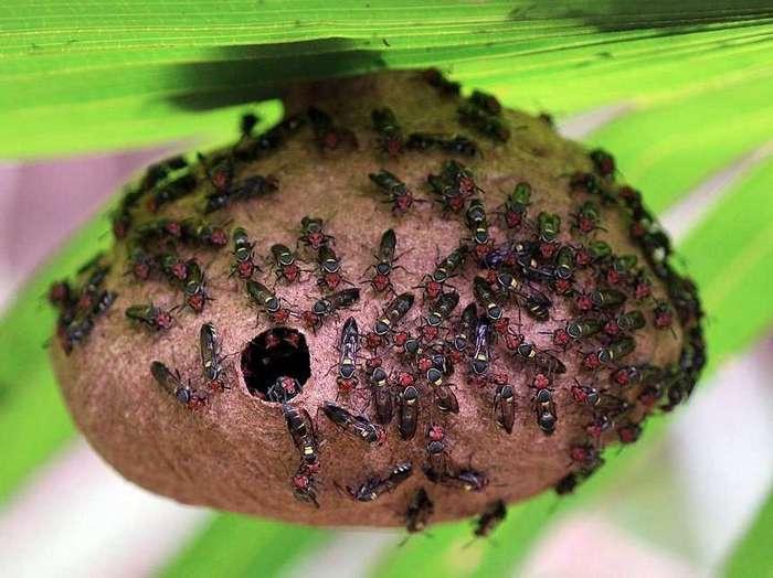 Худшие укусы насекомых в мире, по словам мужчины, испытавшего их все