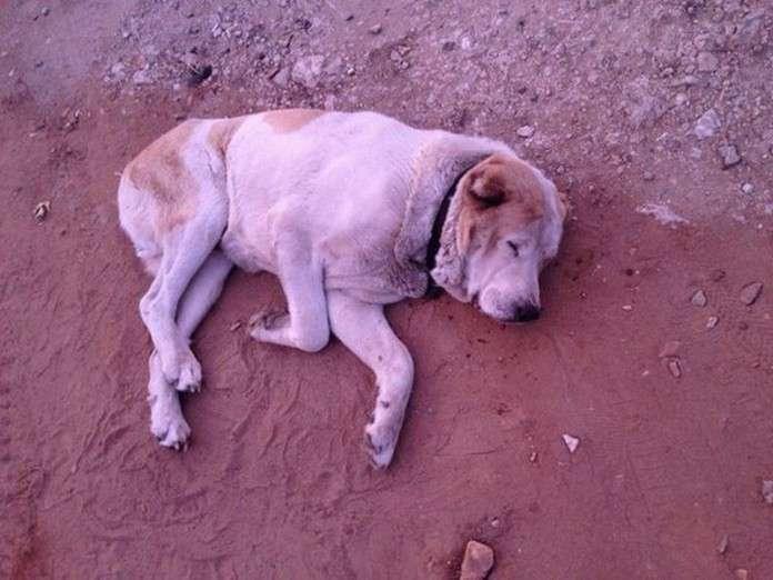 Он просто лежал и умирал. Но нашлась одна добрая душа!