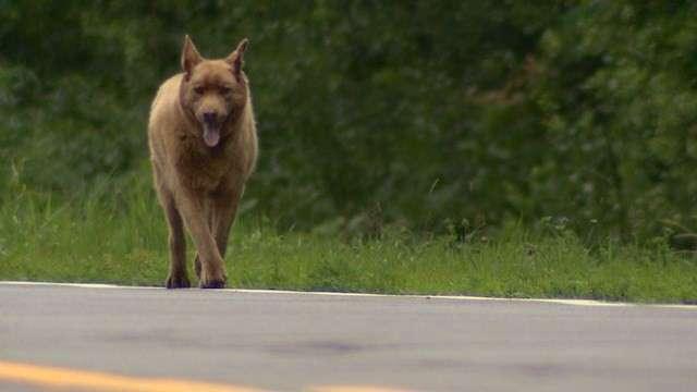 Каждый день эта старая собака проходит 6 километров, чтобы поздороваться с людьми
