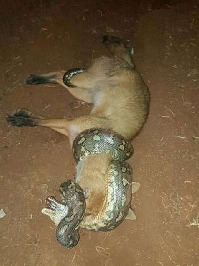 Когда добыча становится охотником
