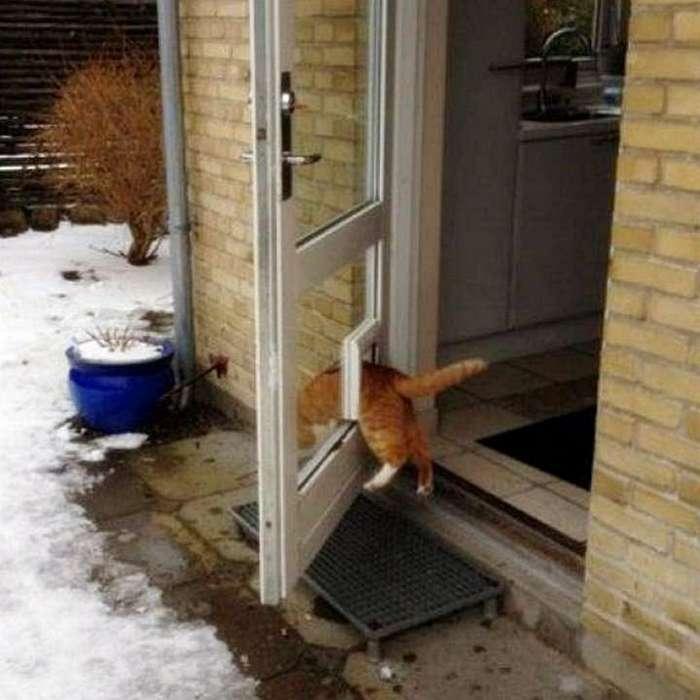 Коты, которым плевать на это ваше общественное мнение