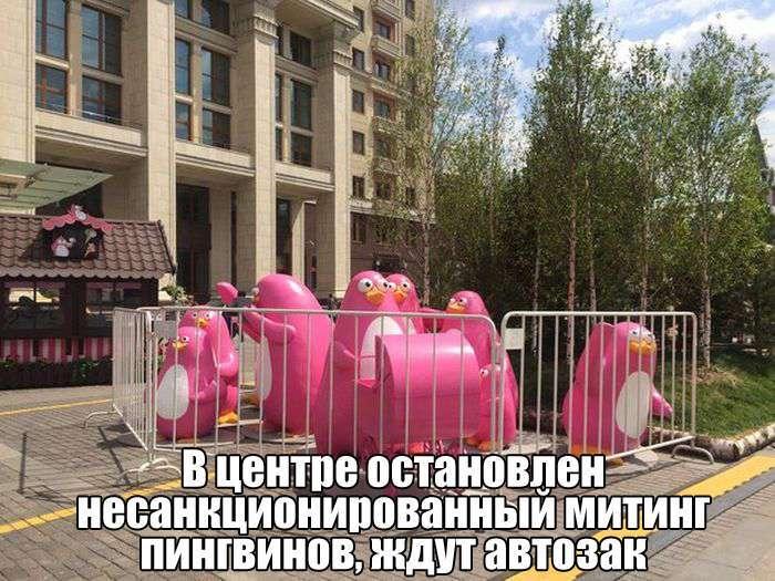 Подборка прикольных фото №1406 (112 фото)