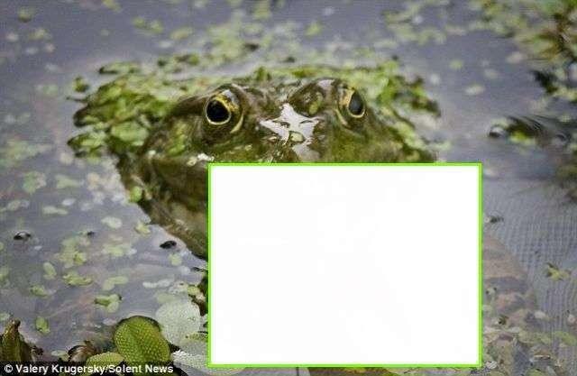 Что едят лягушки (4 фото)