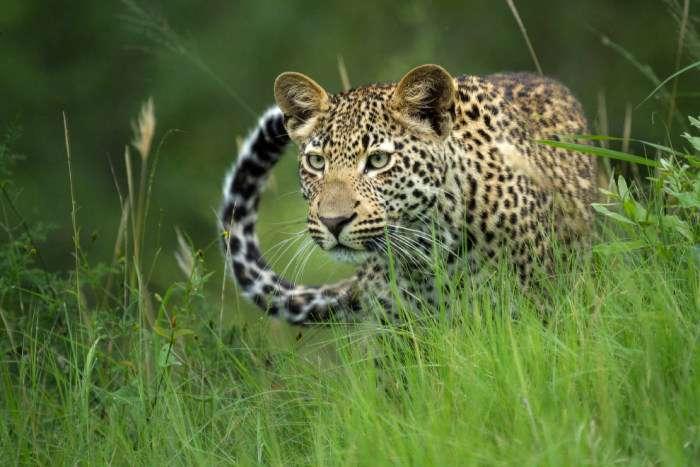 Лучший фотограф Африки и его работы (15 фото)