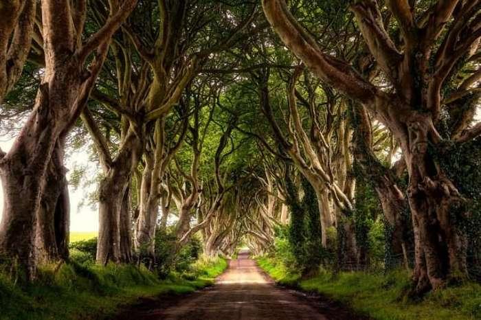Удивительные леса и рощи