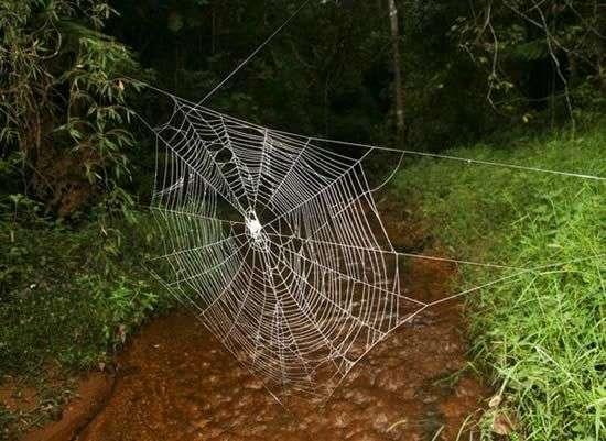 Самая большая паутина (6 фото)