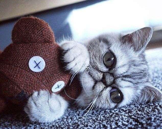 Котенок родился с таким огромными глазами, что не может их закрыть даже во время сна